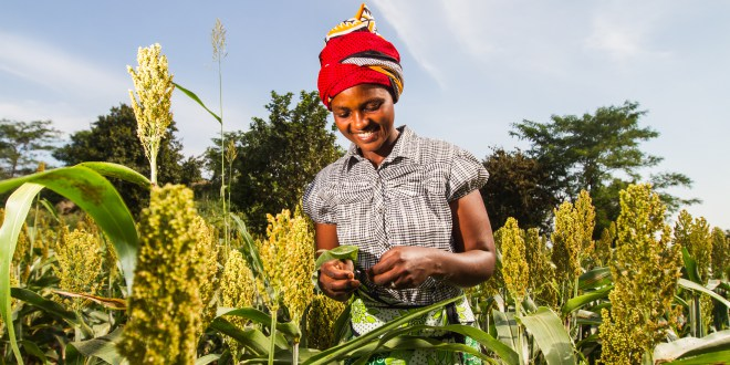 youth-farmers-in-Kenya
